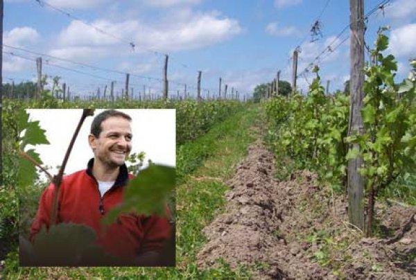 Loïc Mahé : un vigneron loin des clichés
